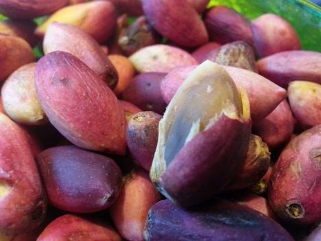 färska pistagenötter
